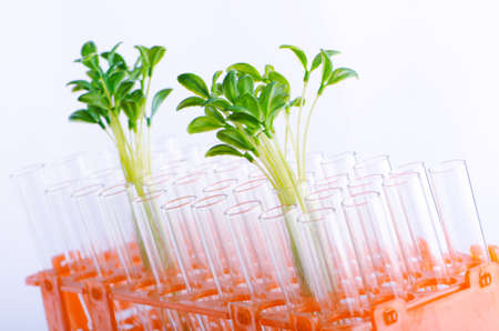 Lab experiment with green seedlings photo