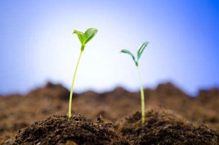 origins: Green seedlings in new life concept Stock Photo