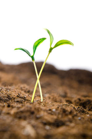 Green seedlings in new life concept Stock Photo - 11181962