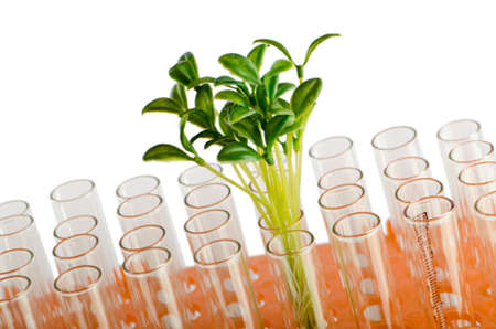 food science: Lab experiment with green leaves Stock Photo