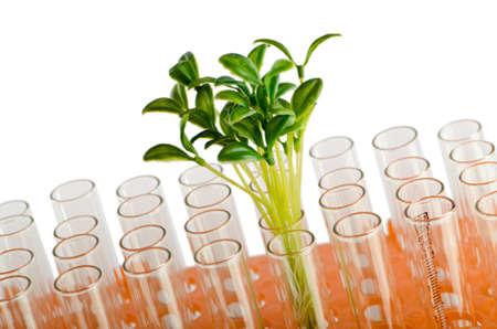 experimento: Laboratorio de experimentaci�n con las hojas verdes Foto de archivo