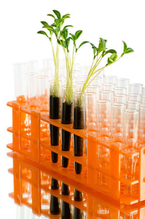 Lab experiment with green leaves photo