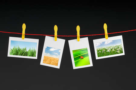 Various nature photos hanging photo