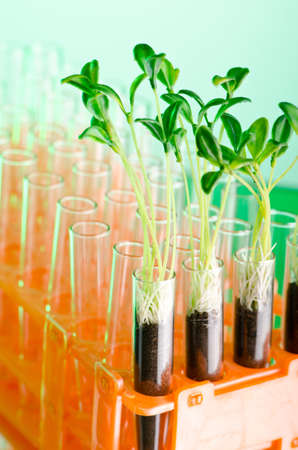 Experiment with green seedlings in the lab Stock Photo - 11572294