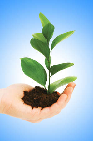 Green seedling in hand isolated on white Stock Photo - 12108950