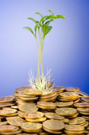 Financial concept with seedlings and coins photo