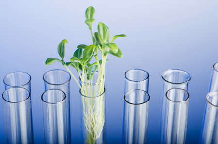 Experiment with green seedling in lab photo