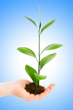 Green seedling in hand isolated on white Stock Photo - 12226154