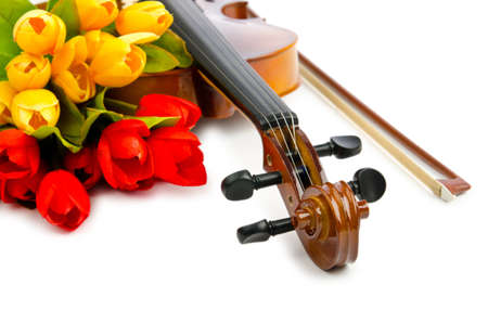 Violin and tulip flowers on white Stock Photo - 12228793