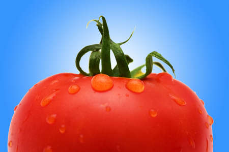 Fresh Red tomato against gradient Stock Photo - 12225706