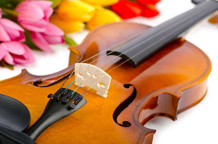 Violin and tulip flowers on white photo