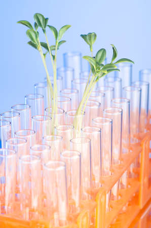 Lab tests with green seedlings photo