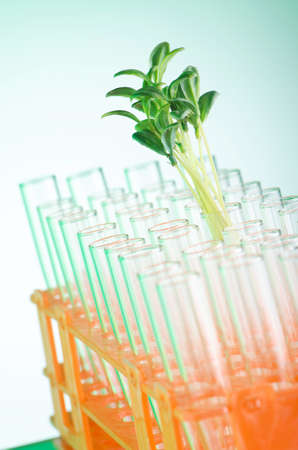 Lab tests with green seedlings Stock Photo - 12349354