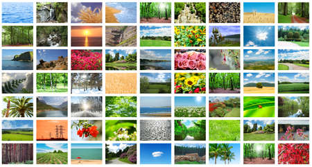 flower photos: Collage of many nature photos Stock Photo