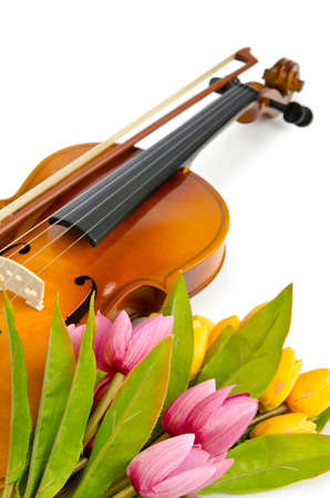 fiddles: Violin and tulip flowers on white