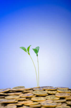 Financial concept with seedlings and coins Stock Photo - 12504113