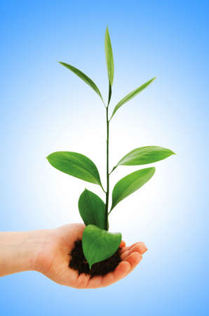 Green seedling in hand isolated on white Stock Photo - 12581157