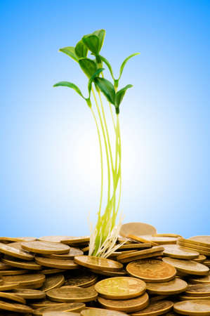 Money growth concept with coins and seedling photo