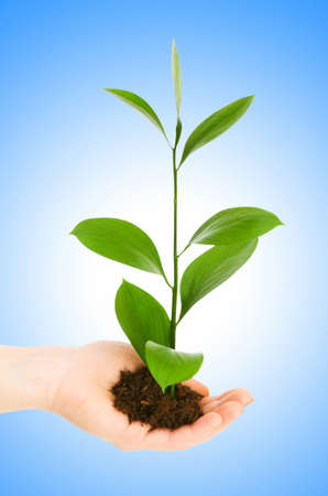 Green seedling in hand isolated on white Stock Photo - 12715461