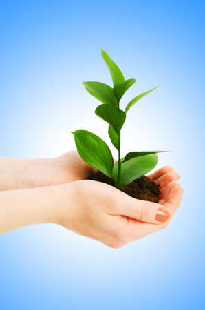 Green seedling in hand isolated on white Stock Photo - 12798908