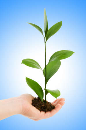 Green seedling in hand isolated on white photo