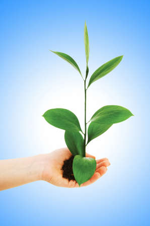 Green seedling in hand isolated on white Stock Photo - 13223175