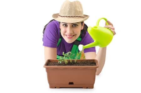 regando plantas: Chica plantas de riego en blanco Foto de archivo