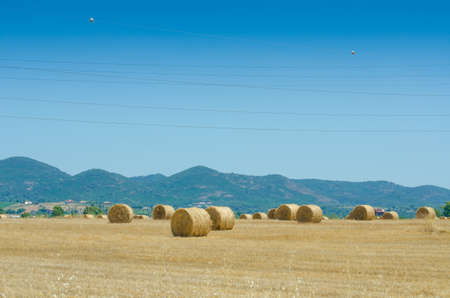 Field with rolls of hay on summer day Stock Photo - 14881479