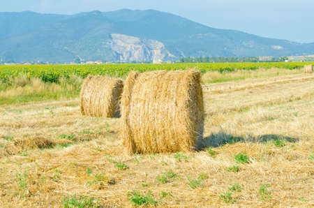 Field with rolls of hay on summer day photo