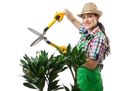 Woman gardener trimming plans on white photo