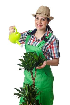 arroser plantes: L'arrosage des plantes femme sur fond blanc