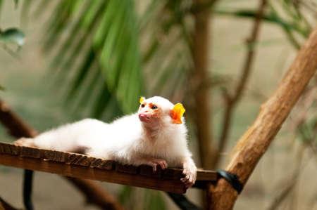Monkey sitting on the branch Stock Photo - 15929629