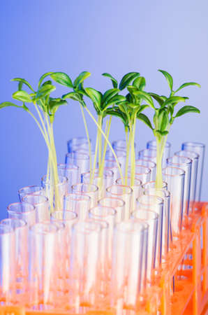 Lab experiment with green seedlings Stock Photo - 16716230
