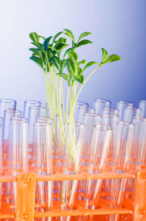 Lab experiment with green seedlings Stock Photo - 17368024