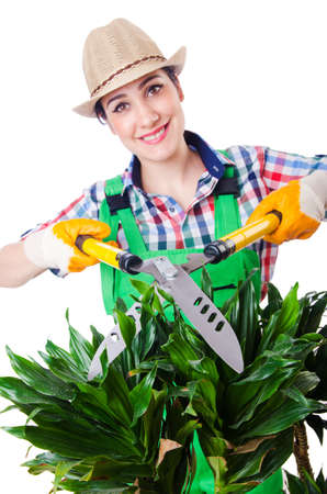Woman gardener with shears on white photo