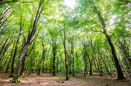 Green forest during bright summer day Stock Photo - 18745021