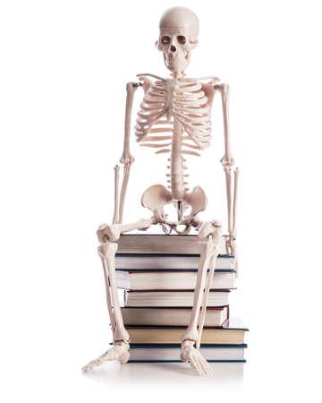 Skeleton with books isolated on white Stock Photo - 19038739