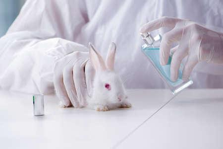 White rabbit in scientific lab experiment 스톡 콘텐츠