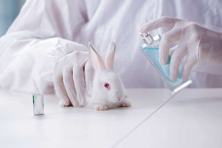 White rabbit in scientific lab experiment Фото со стока