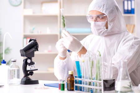 Biotechnology scientist chemist working in lab Stok Fotoğraf