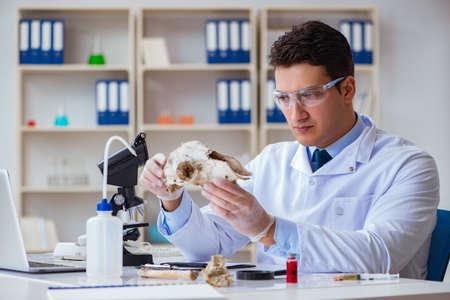 Paleontologo guardando osso animale estinto Archivio Fotografico - 99537203