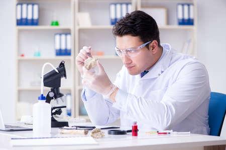 Paleontologist looking at extinct animal bone