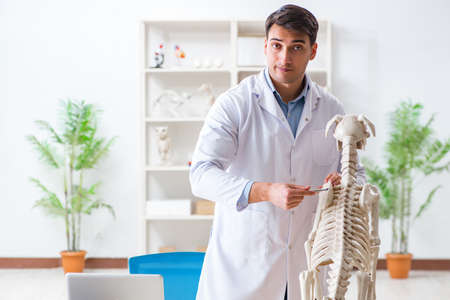 Doctor vet practicing on dog skeleton Фото со стока