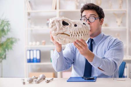 Funny crazy professor studying dinosaur skeleton Stock Photo