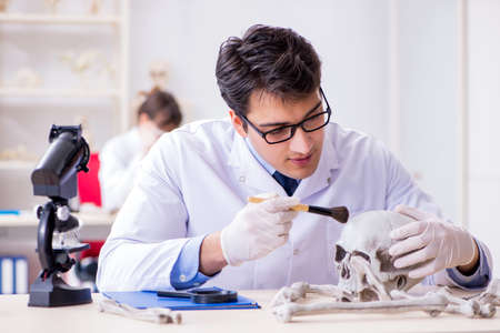 Professor studying human skeleton in lab