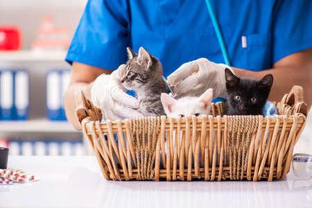 Vet doctor examining kittens in animal hospital