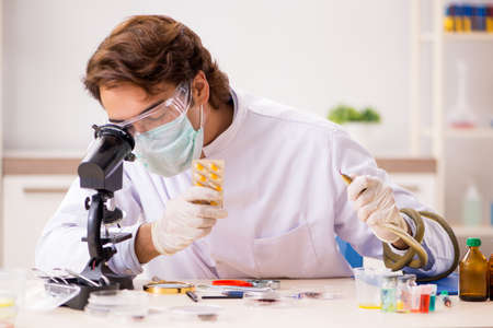 Male scientist extracting poison from snake for drug synthesis