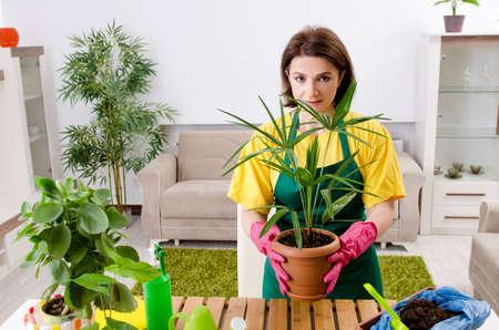Female gardener with plants indoors Stock Photo