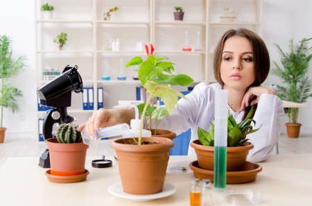 Young beautiful biotechnology chemist working in the lab Stok Fotoğraf