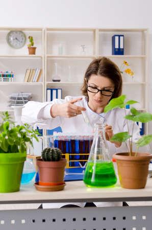 Old female biotechnology chemist working in the lab Zdjęcie Seryjne - 124748675